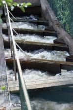 Fischtreppe in Svängsta