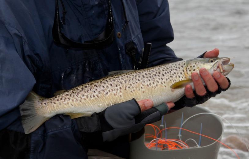 Der größte Fisch der Woche