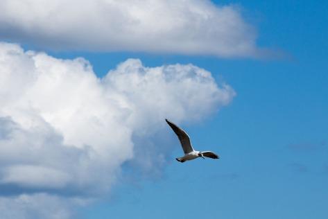 Birds flying high...
