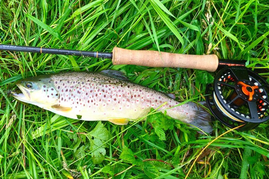 """Bachforelle aus der Strecke """"Hammermühle"""", gefangen an einer Scott Radian, eine wunderbare Rute für diese Fischerei."""