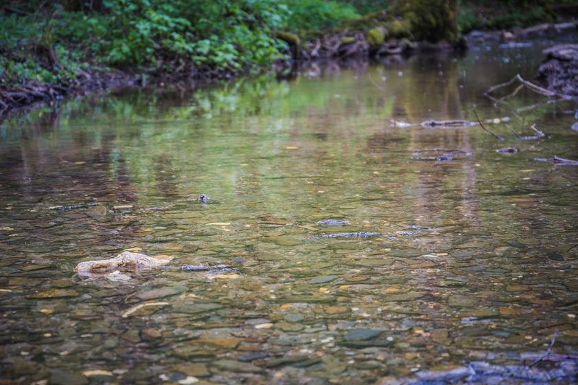 Der Pommerbach führte Niedrigwasser.