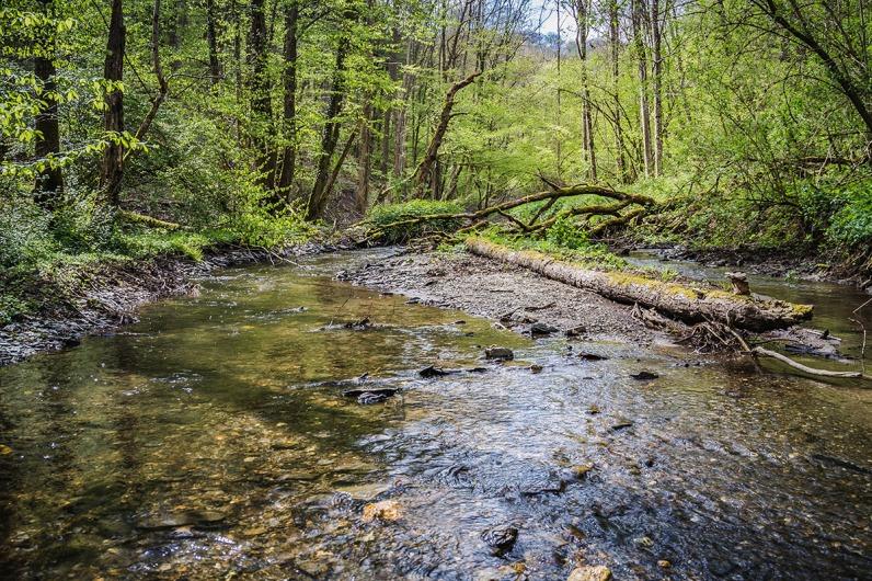 Heute liegt der Baum parallel zur Strömung. Nach dem nächsten Hochwasser kann es schon wieder ganz anders sein.